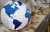 avicultura-El-valor-del-pollo-como-primera-produccion-carnica-mundial-Montse-Mor-Mur-UAB