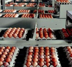 huevos-giralda