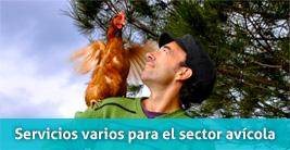 Servicios varios para el sector avícola