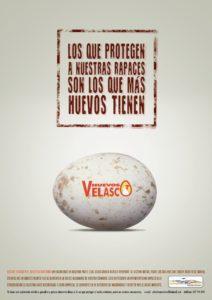 Huevos-Velasco-colectivo-azalvaro-gallinas-muertas