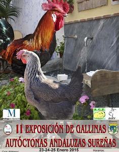 gallina-andaluza-sureña