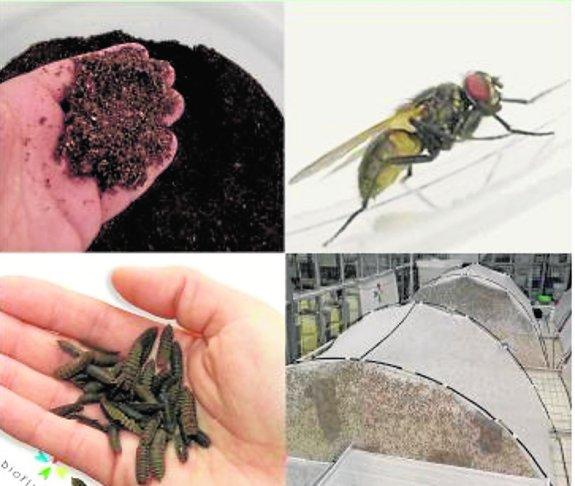 insectos-alimentacion-animal