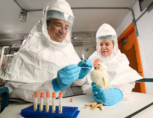 vacuna-usda-gripe-aviar