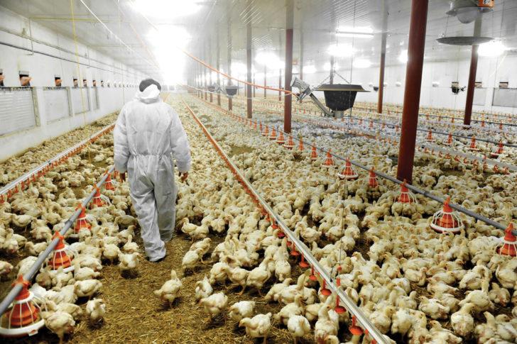 ¿Qué granjas tienen futuro?