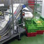 Inspecciones de bienestar animal en broilers