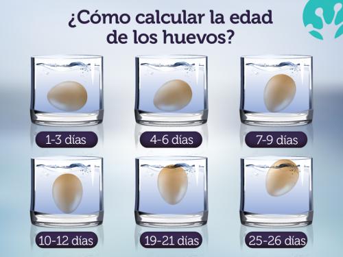 edad de huevos calcular