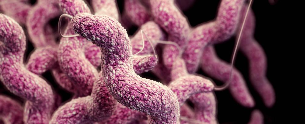 Campylobacter-Reino Unido-bacterias