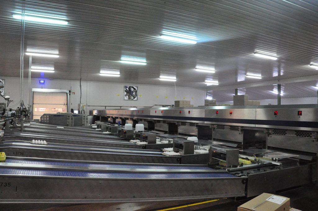 OMNIA FT 500. Vista de las líneas de empacado.