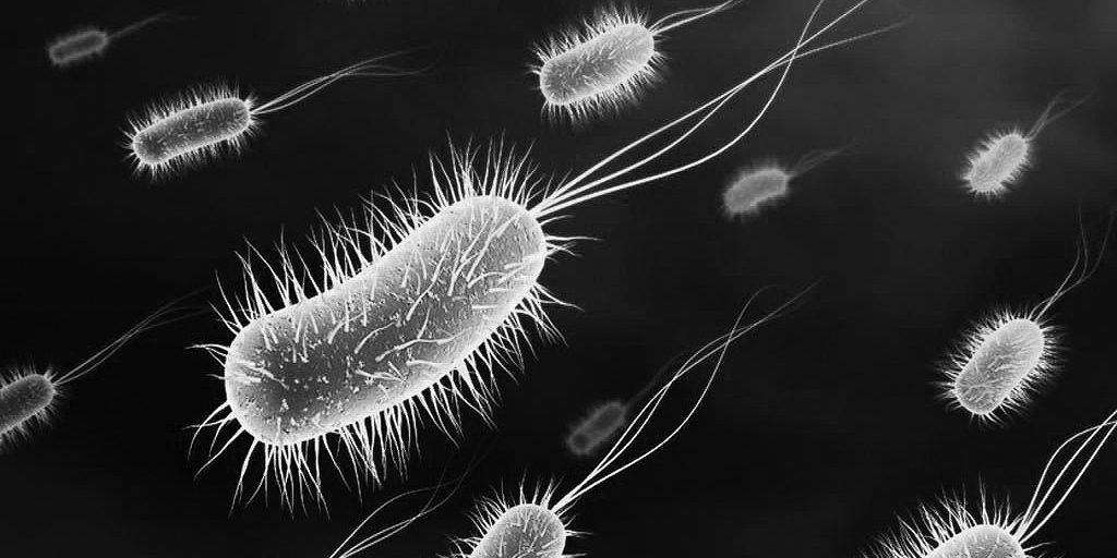 Resultado de imagen de salmonella