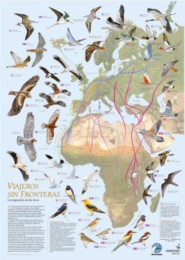 gripe-aviar-aves-migratorias-365xXx80