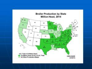 """Más del 90% de las granjas de pollos en EEUU están localizadas en el """"Broiler Belt"""" al sureste del país"""