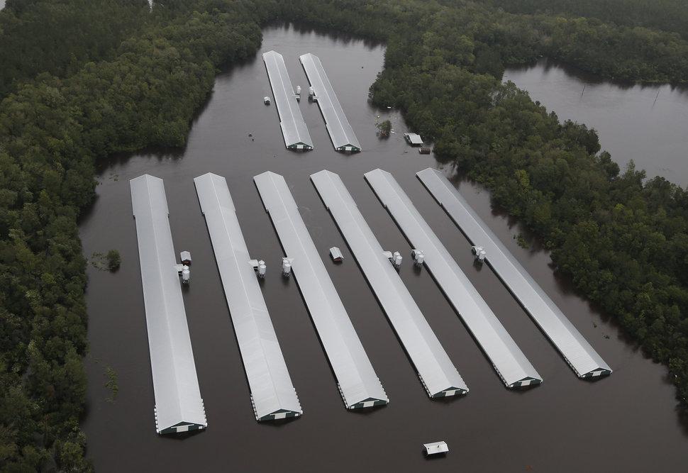 Los daños no han sido tanto por la fuerza del huracán sino por los crecimientos de caudales fluviales. Carolina del Norte, EEUU (16 sept 2018, AP Photo/Steve Helber)