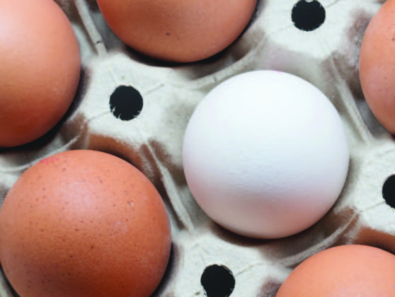 ¿Pueden volver los huevos blancos?