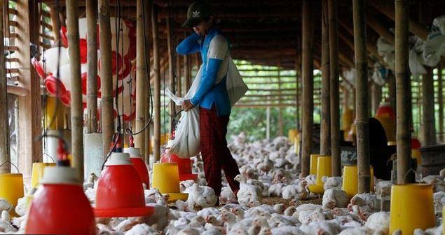 Detectado en China el primer caso de contagio a personas de la cepa H10N3 de influenza aviar